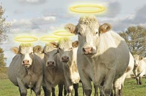 sacred-cows